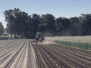 Ersteinsatz Mais hacken am 31.05.2021