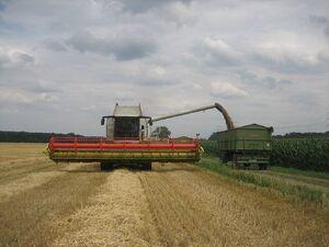 Getreide- / Rapsdrusch